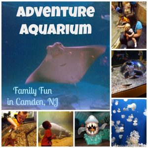 Fun For the Whole Family at Adventure Aquarium