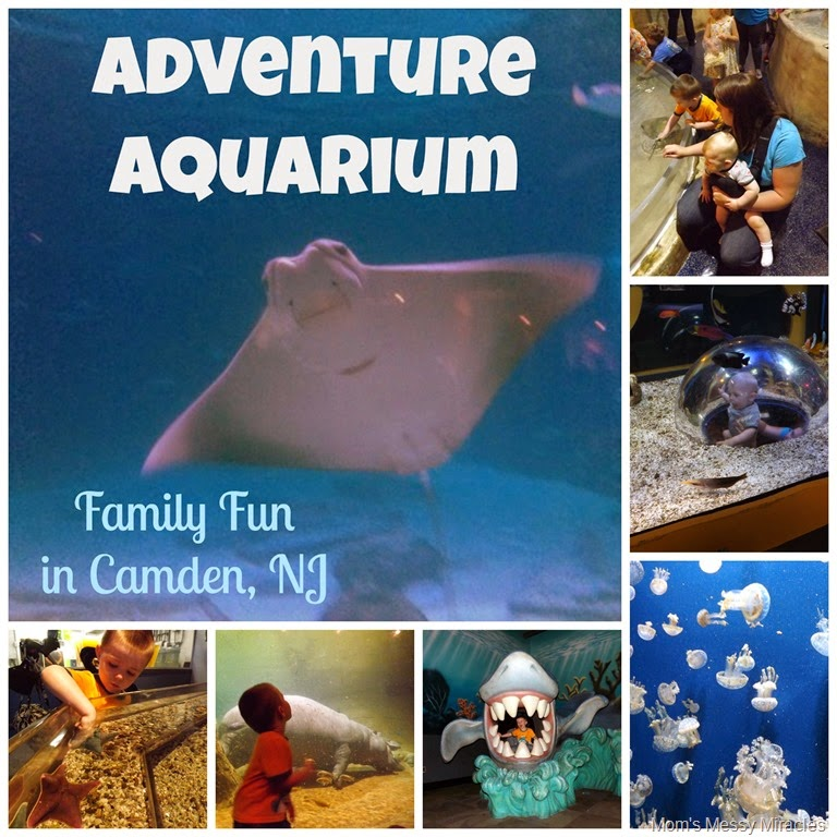 Fun For the Whole Family at Adventure Aquarium