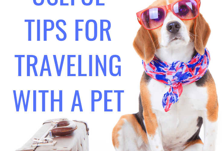 4 Useful Tips for Traveling with a Pet